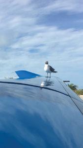 Pilatus PC-12 wing at Cat Cay, Bahamas